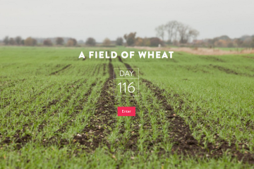 fieldofwheat